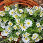 flores_3