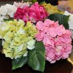 flores_6