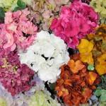 flores_7